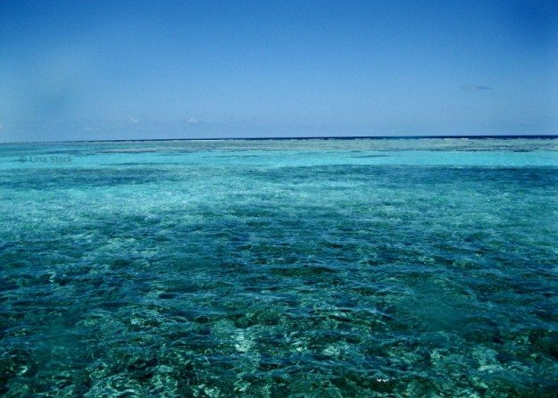 Great Maya Reef- Belize