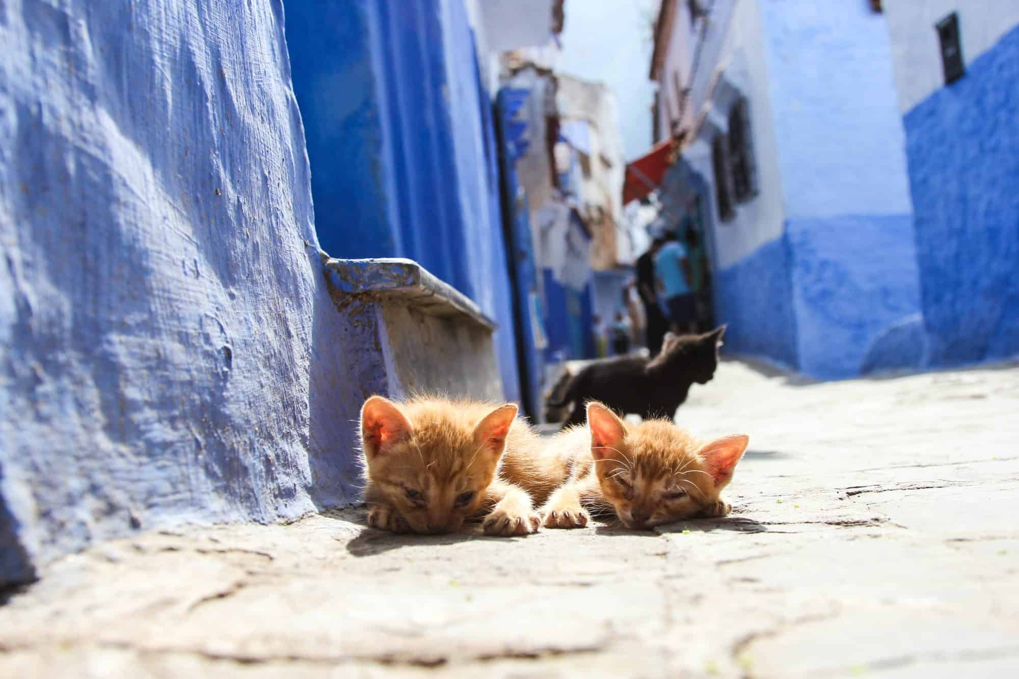 Discovering Chefchaouen The Blue City Of Morocco